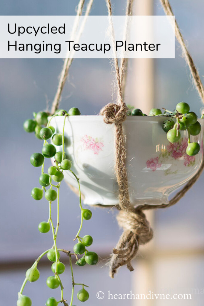 A rose vintage teacup is holding a string of pearls plant and hung with twine in a window.