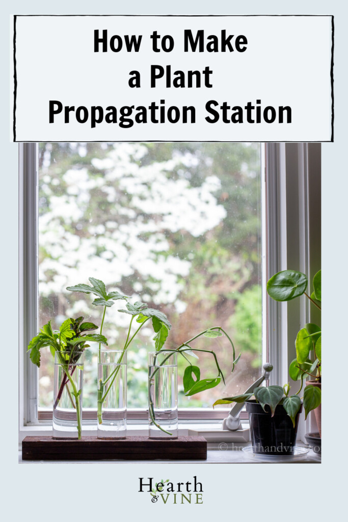 Windowsill with plants and wooden propagation station holding plant cuttings in water.