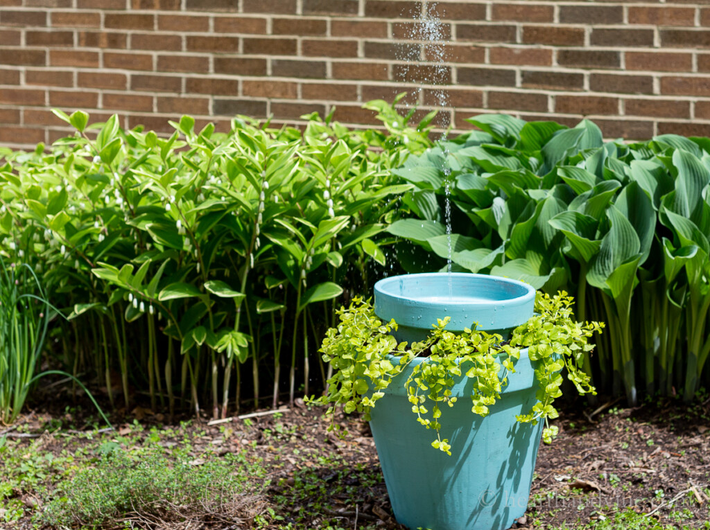 Solar water fountain and planter in the garden surrounded by Hosta and Solomon's seal.