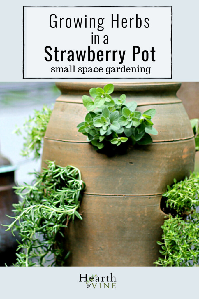 Herbs growing in a strawberry pot.