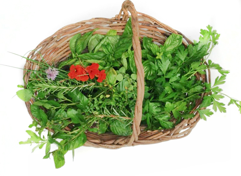 Basket of herbs to make an herbal infusion