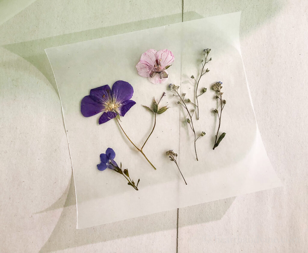 Pressed flowers arranged on a square piece of waxed paper.