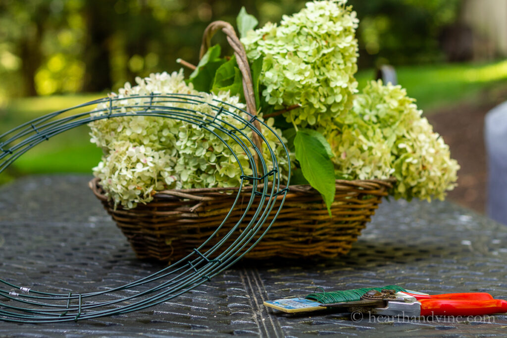 Flores frescas de hortênsia Limelight em uma cesta com uma armação de coroa de arame, uma pá de arame e podadores em uma mesa.