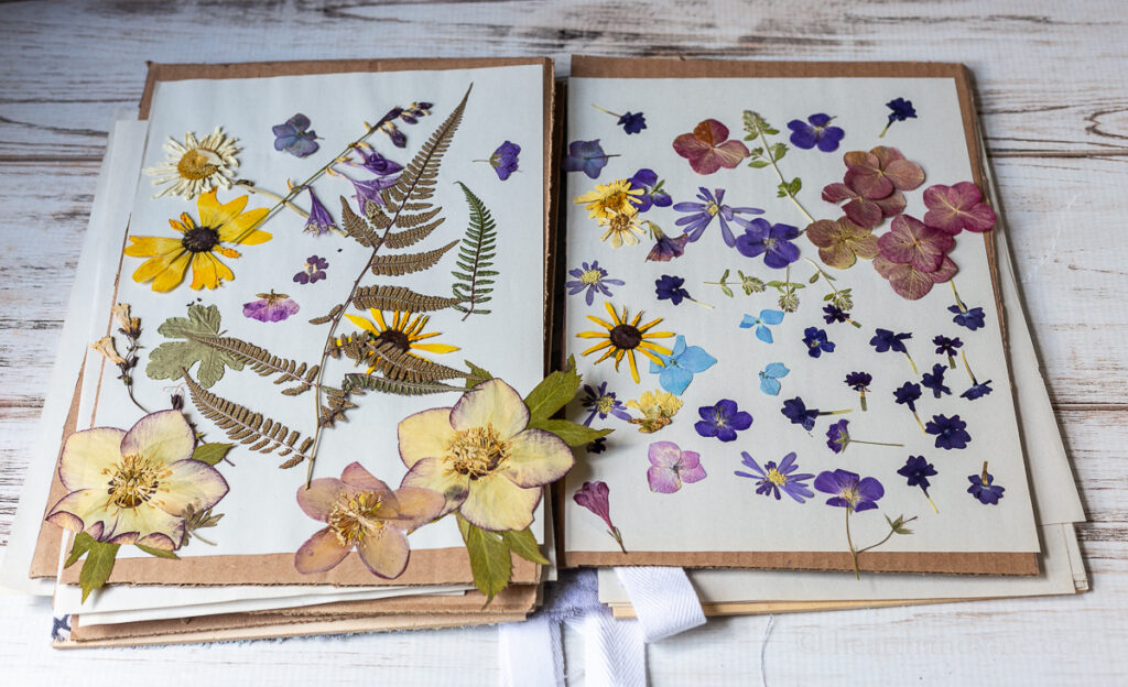 Pressed flowers in a flower press book.