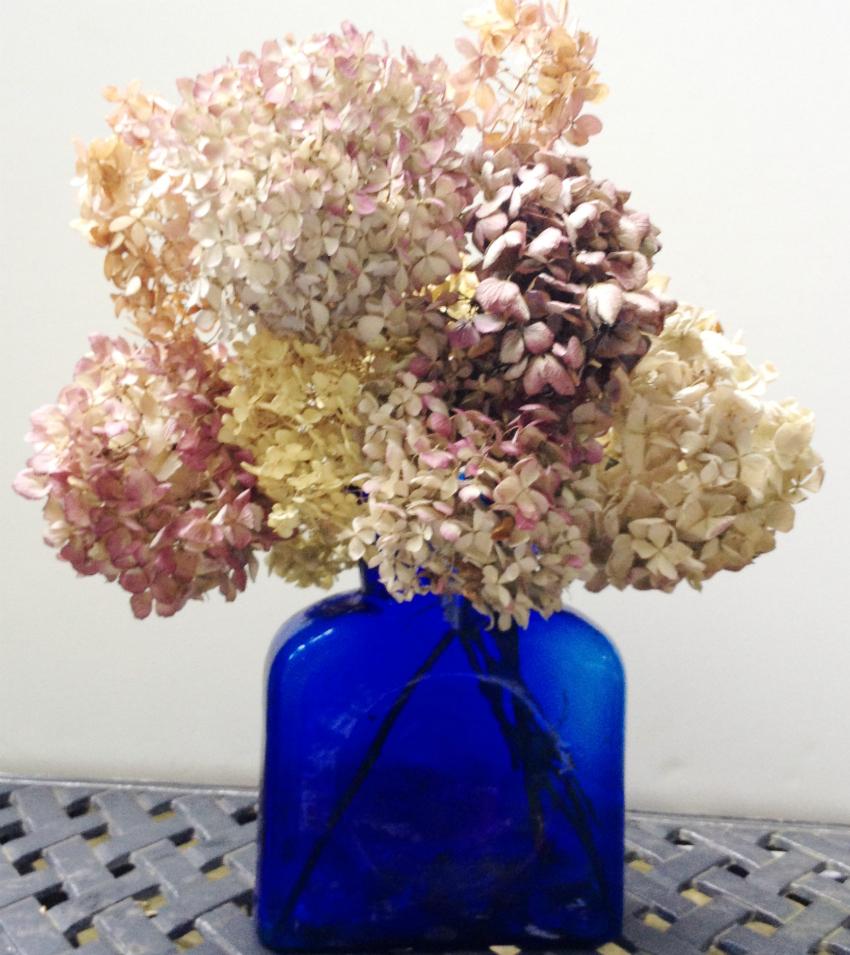 Three year old dried hydrangea bouquet.