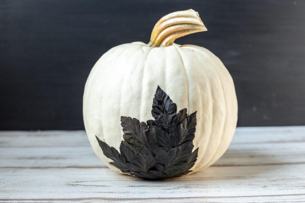 Dark leaves covering blemish on pumpkin with mod podge.
