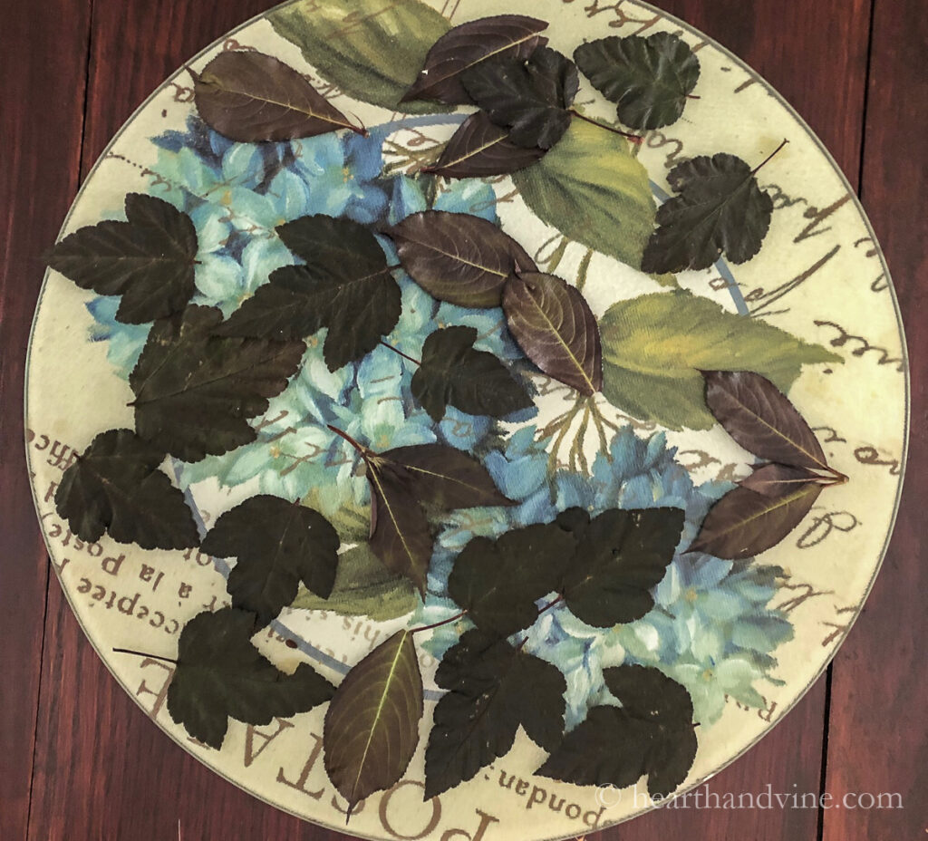 Dark leaves on a tray that have been pressed.