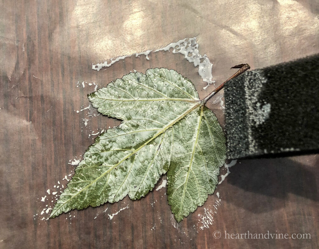 Back of leaf painted with mod podge.