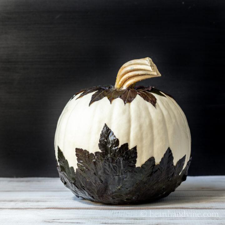 Mod podge pumpkin with black garden leaves.