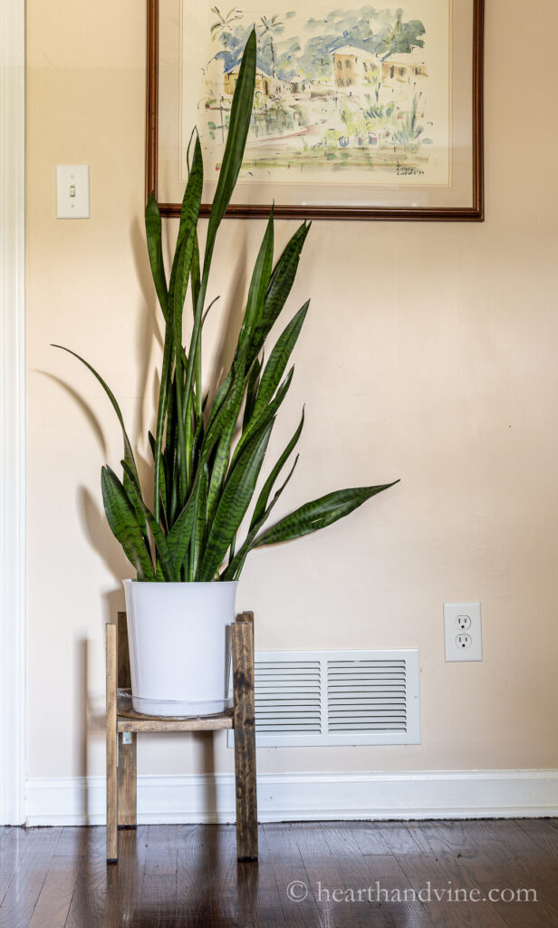 Snake plant on a wood plant stand in a family room.