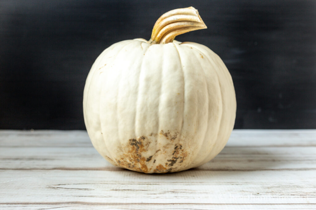 Plain white pumpkin with blemish at the bottom.