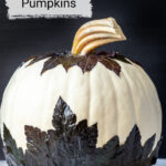White pumpkin decorated with dark leaves.