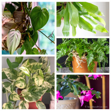 Christmas cactus, rabbit's foot fern, staghorn fern, pothos, and philodendron plants