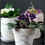 3 Ways to Age Terracotta Pots - gardenmatter.com