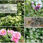 5 good shrub choices for your garden. They are all easy to grow. See what else I love about them.