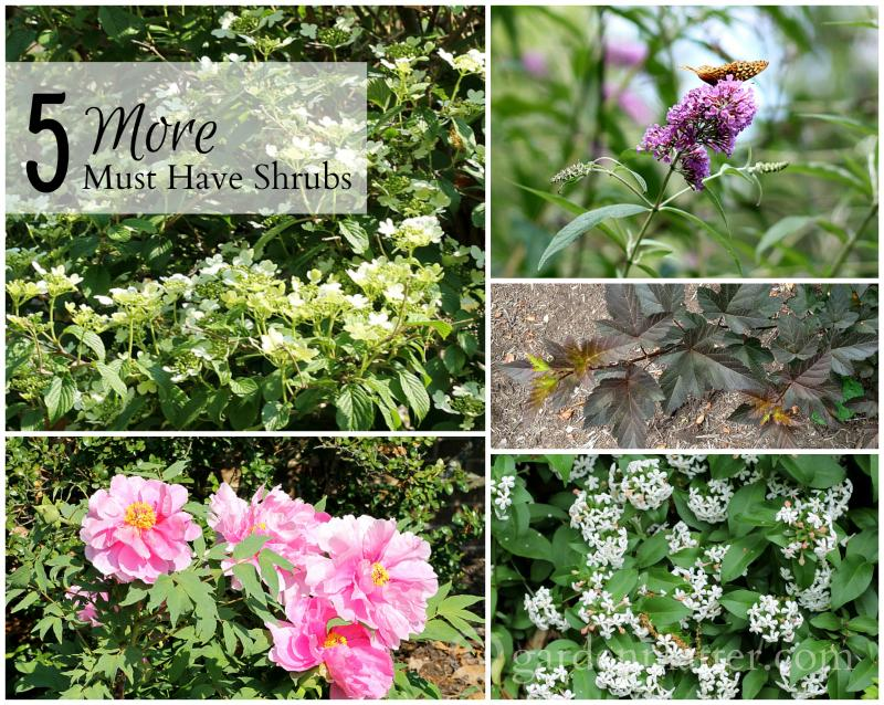 5 More Must Have Shrubs For Your Garden