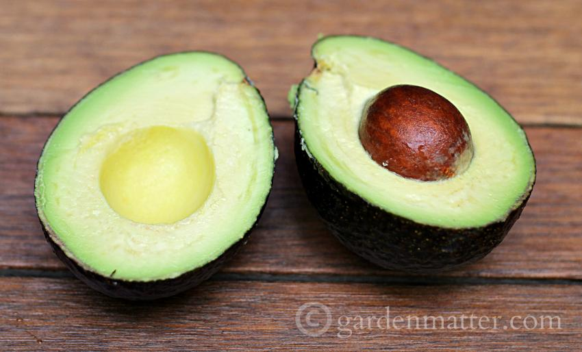 Avocado split in half