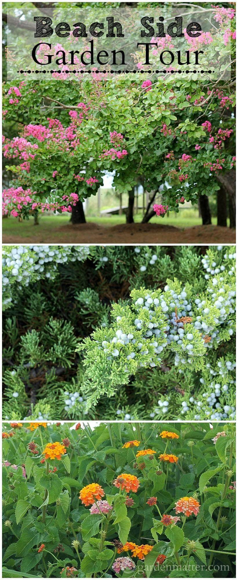 Enjoy a garden tour of plants growing at the beach in Sandbridge Virginia