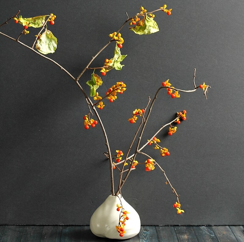 Beautiful Bittersweet Vine: Decorating with Nature