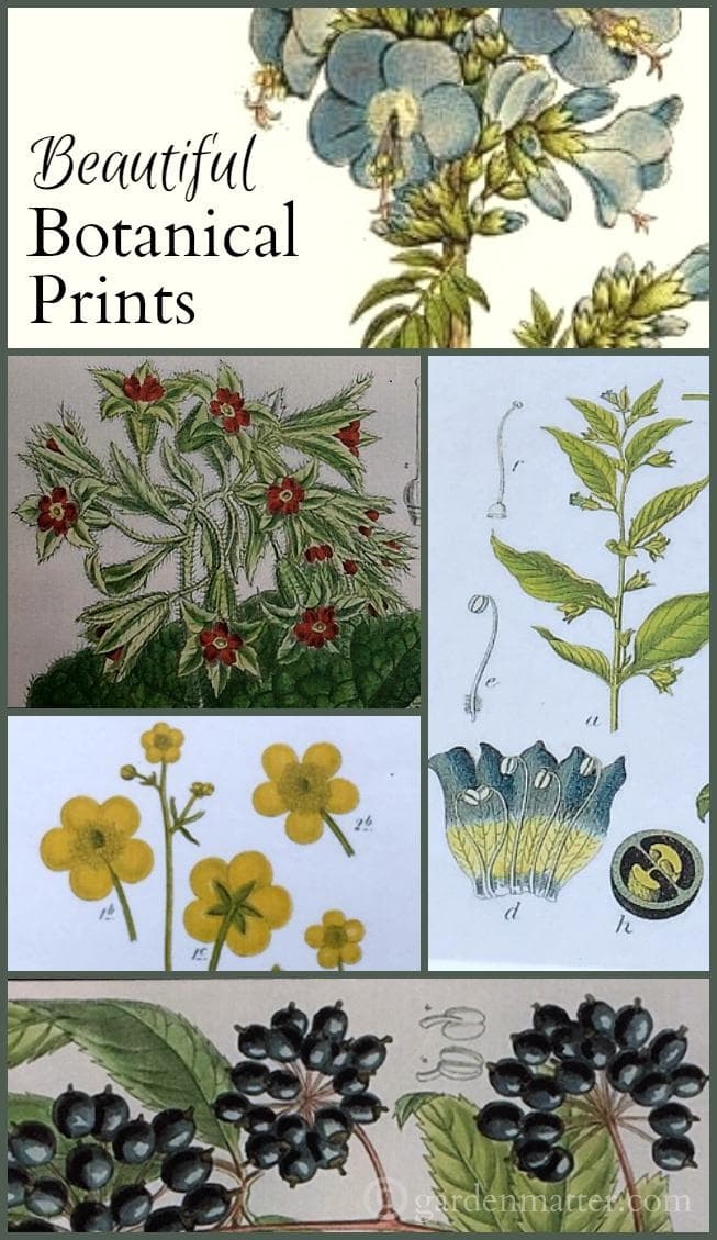 Learn where you can find free botanical prints for use in making pretty artworks, cards and gifts tags. Also a few free downloads.