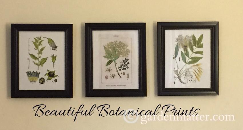 Beautiful Botanical Prints: Make Great Gifts