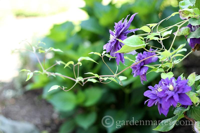 Garden Tour: Pictures Between Raindrops