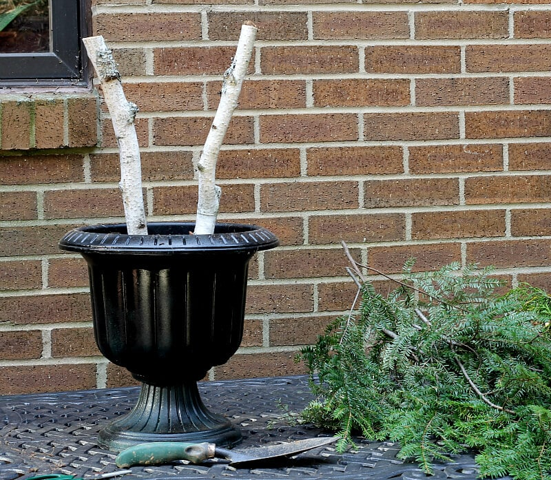 Black urn planter with birch brances on a table and evergreen branches on the side.