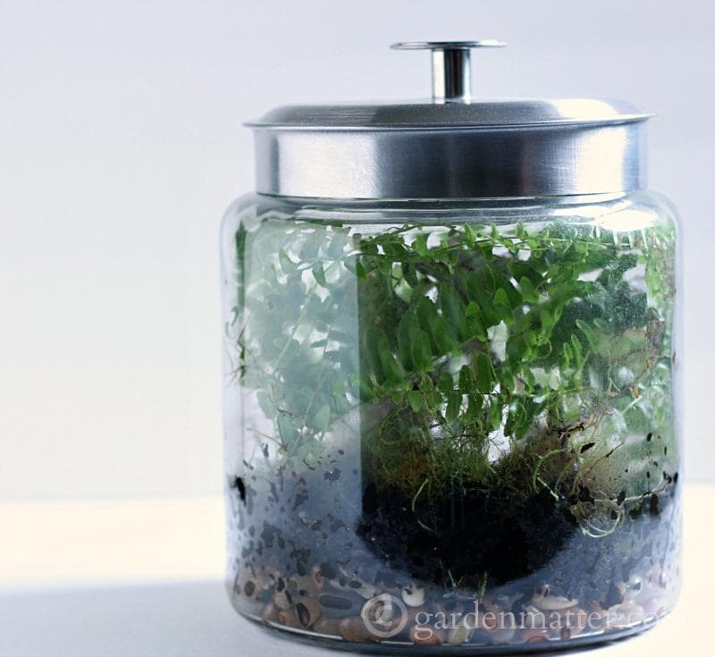 Learn how to make a terrarium from 7 different sources