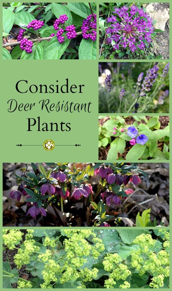 Consider Deer Resistant Plants Garden Matter