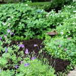 Divide and Conquer – The Skinny on Dividing Perennials