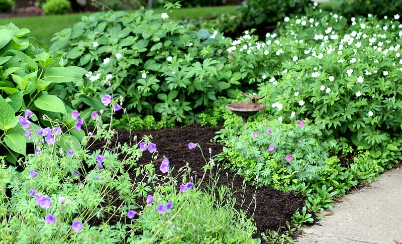 Gardening on the other side of the walk - Basics feature - gardenmatter.com
