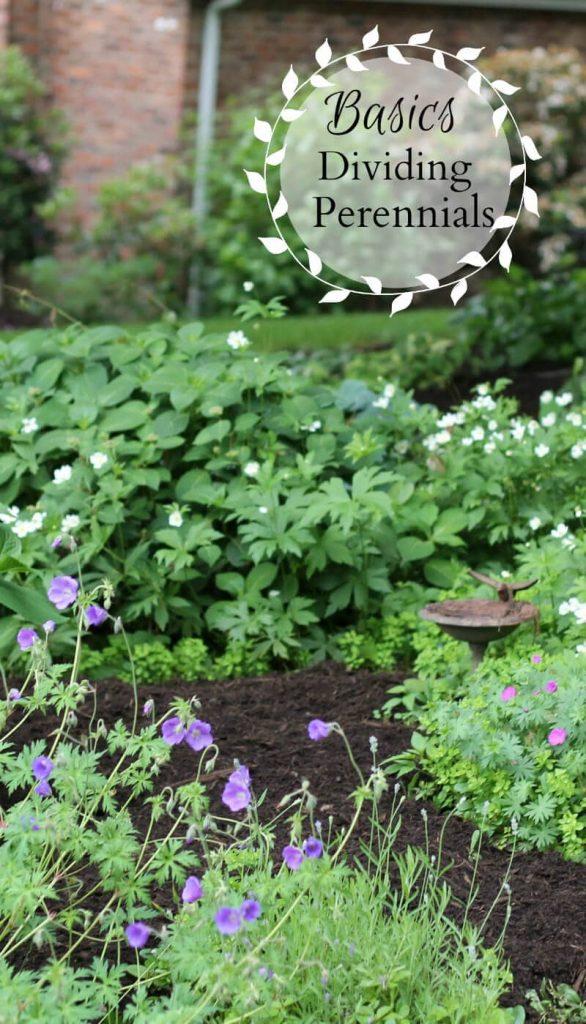 Dividing Perennials - Basics - gardenmatter.com