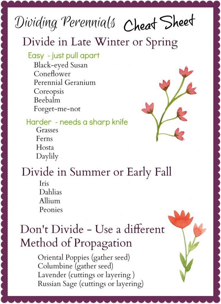 Dividing Perennials Cheat Sheet - gardenmatter.com