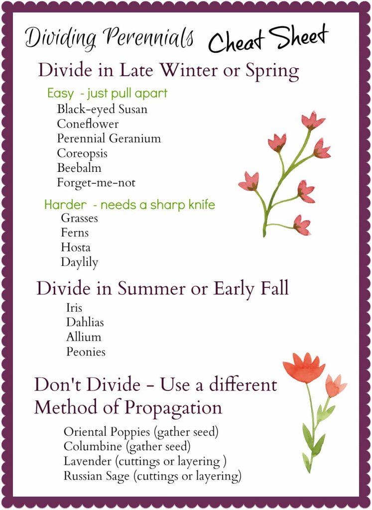 Dividing Perennials Cheat Sheet - gardenmatter.com