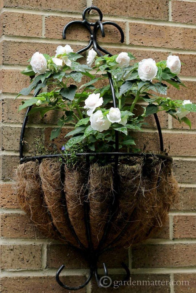 Double Impatiens - white garden - gardenmatter.com