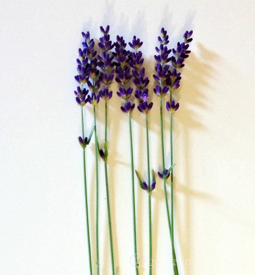 French lavender vs English lavender.  Dried Hidcote lavender