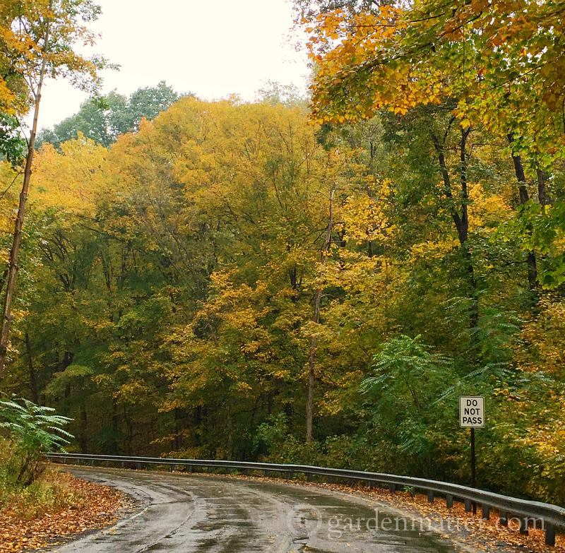 Fall foliage driving on road