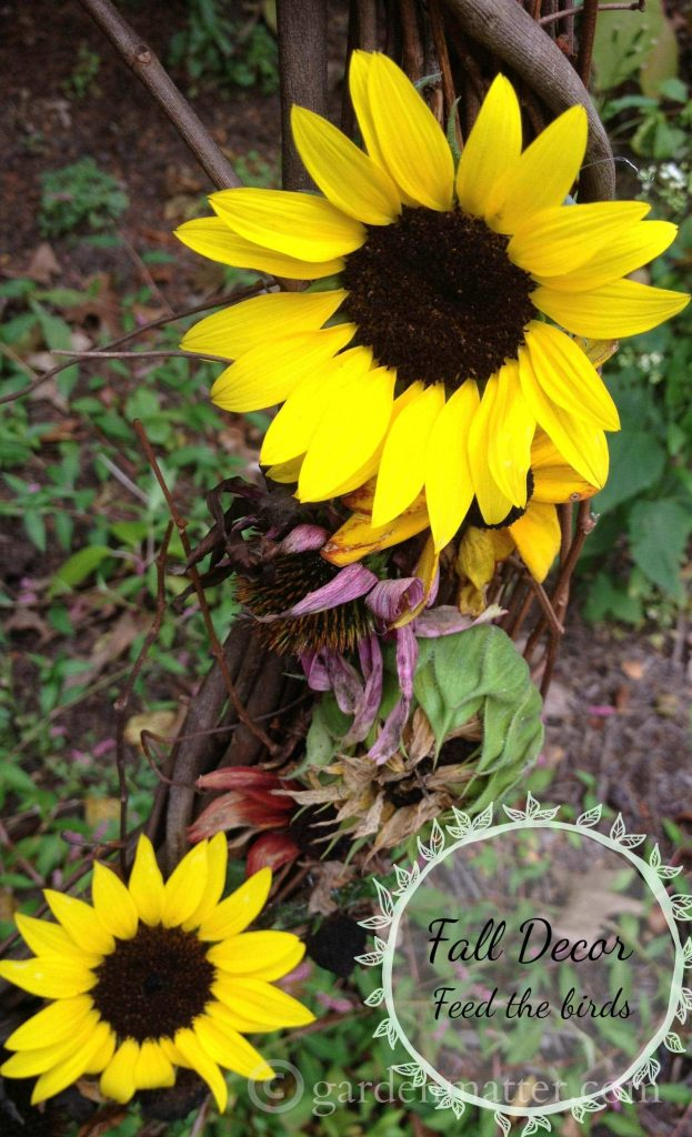 Make a sunflower & coneflower wreath and other seed heads from your flowers. You can enjoy the beauty of the wreath and the birds can enjoy them too.