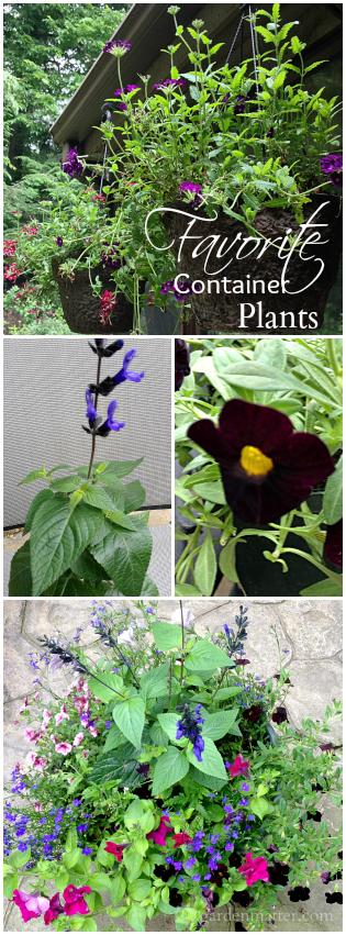 Learn about some of my favorite annual flowers to grow in containers each season. Lots of colorful can't beat, trouble free choices to fill your planters.