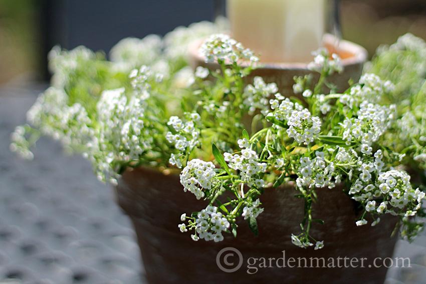 Flower Pot Centerpiece ~ gardenmatter.com