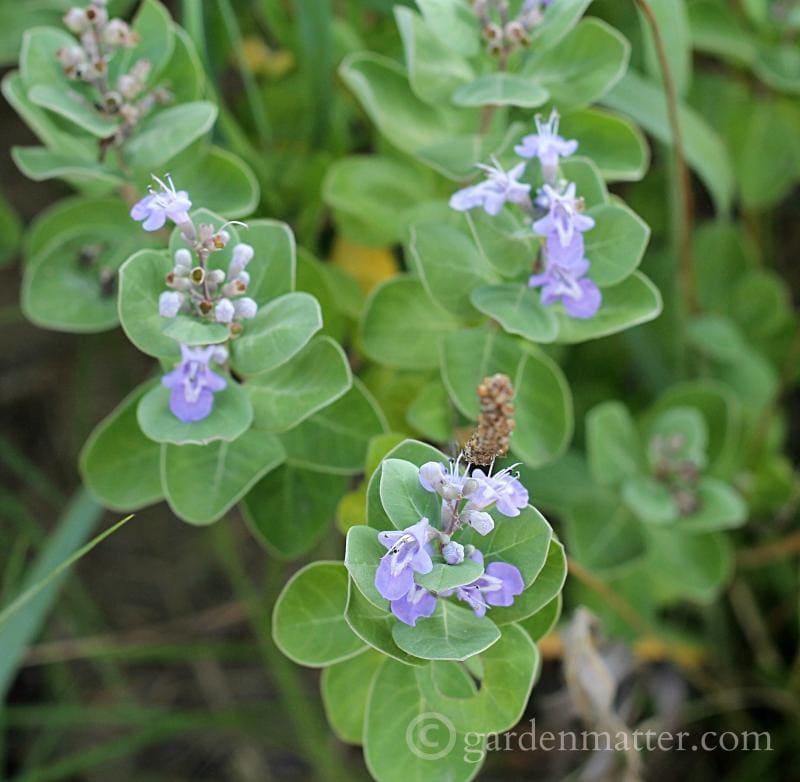 Enjoy a garden tour of plants growing in sunny Sandbridge Beach Virginia