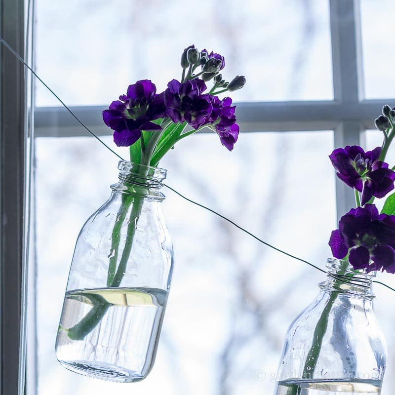 Close up of flowers in bottlel garland