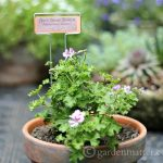 Garden Marker Labels: Free Printable