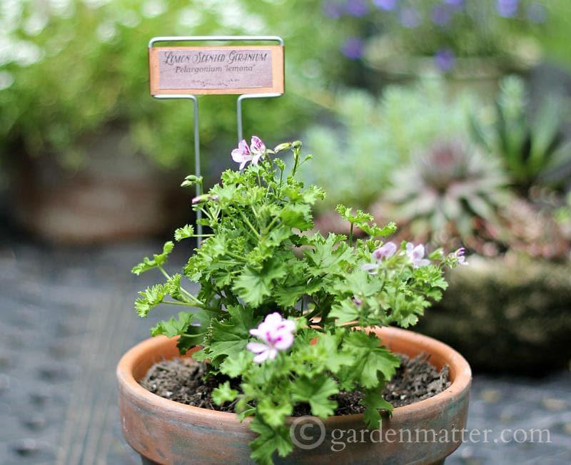 Garden Marker Labels: Free Printable