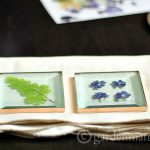 Using square glass and copper tape you can make beautiful coaster from your own flowers in now time and not a lot of money.