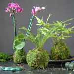 Easy Kokedama: Moss Ball String Garden