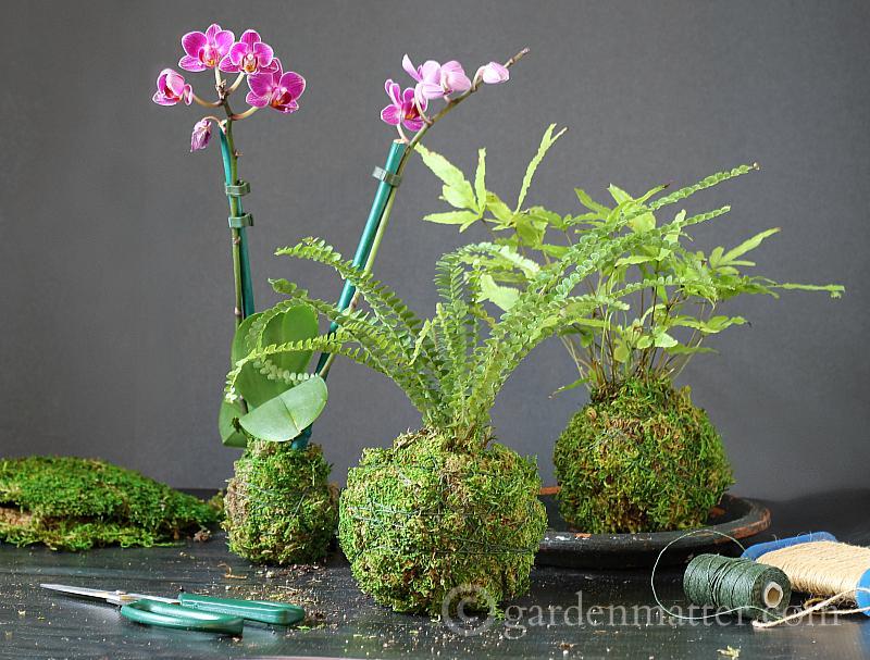 Grouped Moss Balls - Kokedama String Garden - gardenmatter.com
