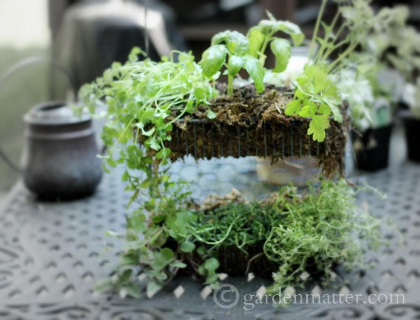 how to make a simple hanging herb garden with a wire shelf - Hanging Herb Garden