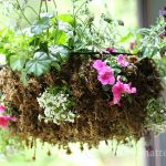 Rustic Sphagnum Moss Hanging Planter