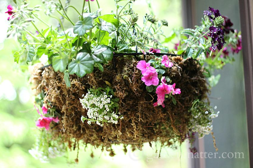 colorful hanging flower basket  ~ Rustic Sphagnum moss planter ~ gardenmatter.com
